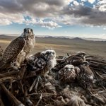Image for the Tweet beginning: Photojournalist Brent Stirton shares how