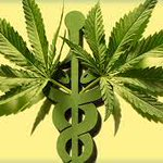 Image for the Tweet beginning: The Medicine of Cannabis: An