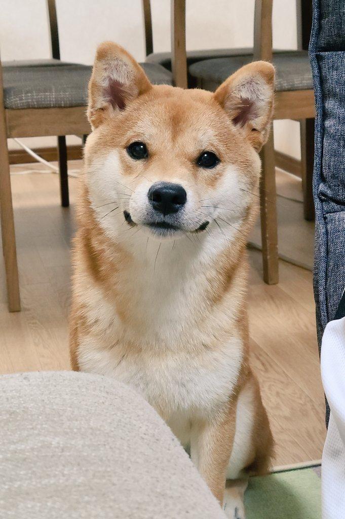 犬さんの投稿画像