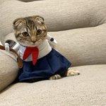 猫のまつたけちゃん、セーラー服がとってもお似合い!反抗期姿がこちら!