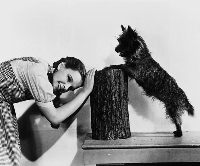 @mubibrasil's photo on Judy Garland