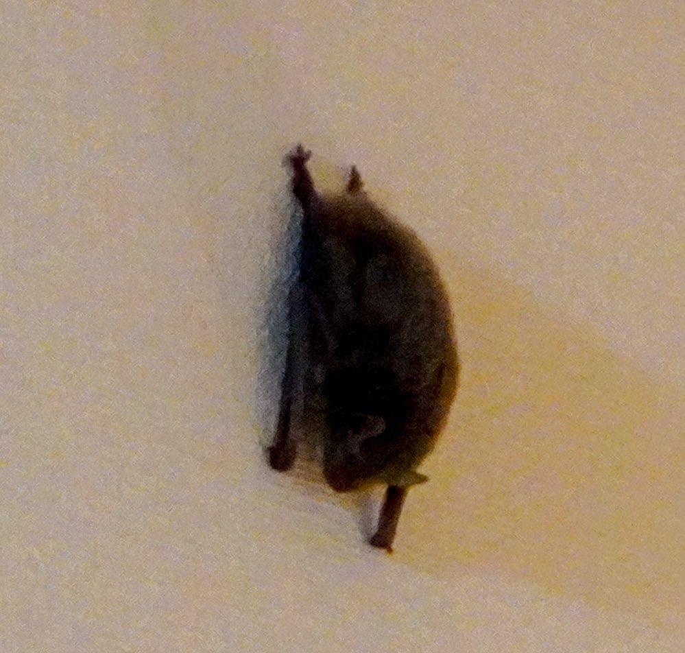 壁に穴が開いている!?電気を付けて確認したらまさかのコウモリだった!