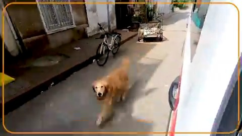 Dog chases ambulance as it takes its owner to the hospital https://t.co/Rm4ESMgLWS