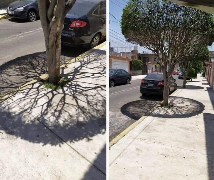 This tree's shadow is simply beautiful https://t.co/Exhu4viOqP
