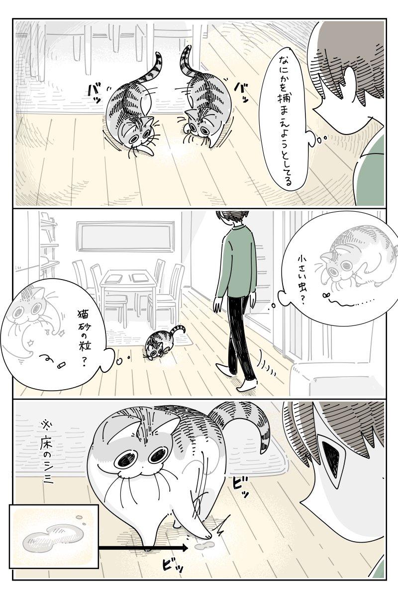 シミがあった場所を眺める、哀愁漂う姿も可愛い!とっても癒される猫漫画が話題に!