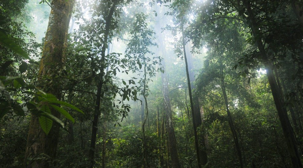 Biodiversity loss and climate change must be tackled together, says @UQ_News @ANUmedia @UniofAdelaide  https://t.co/1yKkFFhRdP https://t.co/bNO2aDwbIX