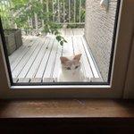猫たちがうちの中をのぞきに来るwww気になることでも起きているのか!