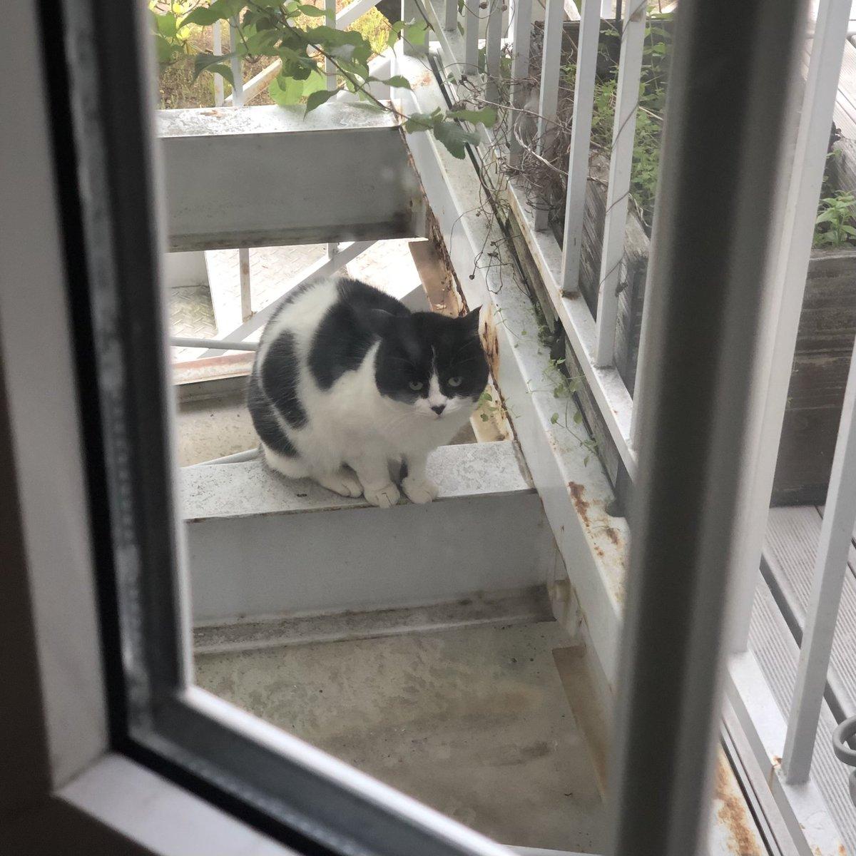 猫たちがうちの中をのぞきに来る!気になることでも起きているのか!