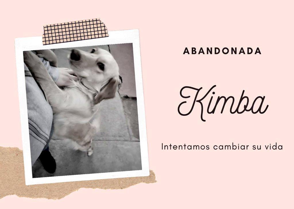 #KIMBA y #OSO  Estos perritos fueron abandonados, ellos son novios, van siempre unidos.  Una niña me ha pedido hacer una campaña para llevarlos juntos a un refugio. Este nos cobra $240.000 por ambos. Se paga una  sola vez y los cuidan de por vida. Ustedes hasta ahora han donado https://t.co/zv0NxVyrG5