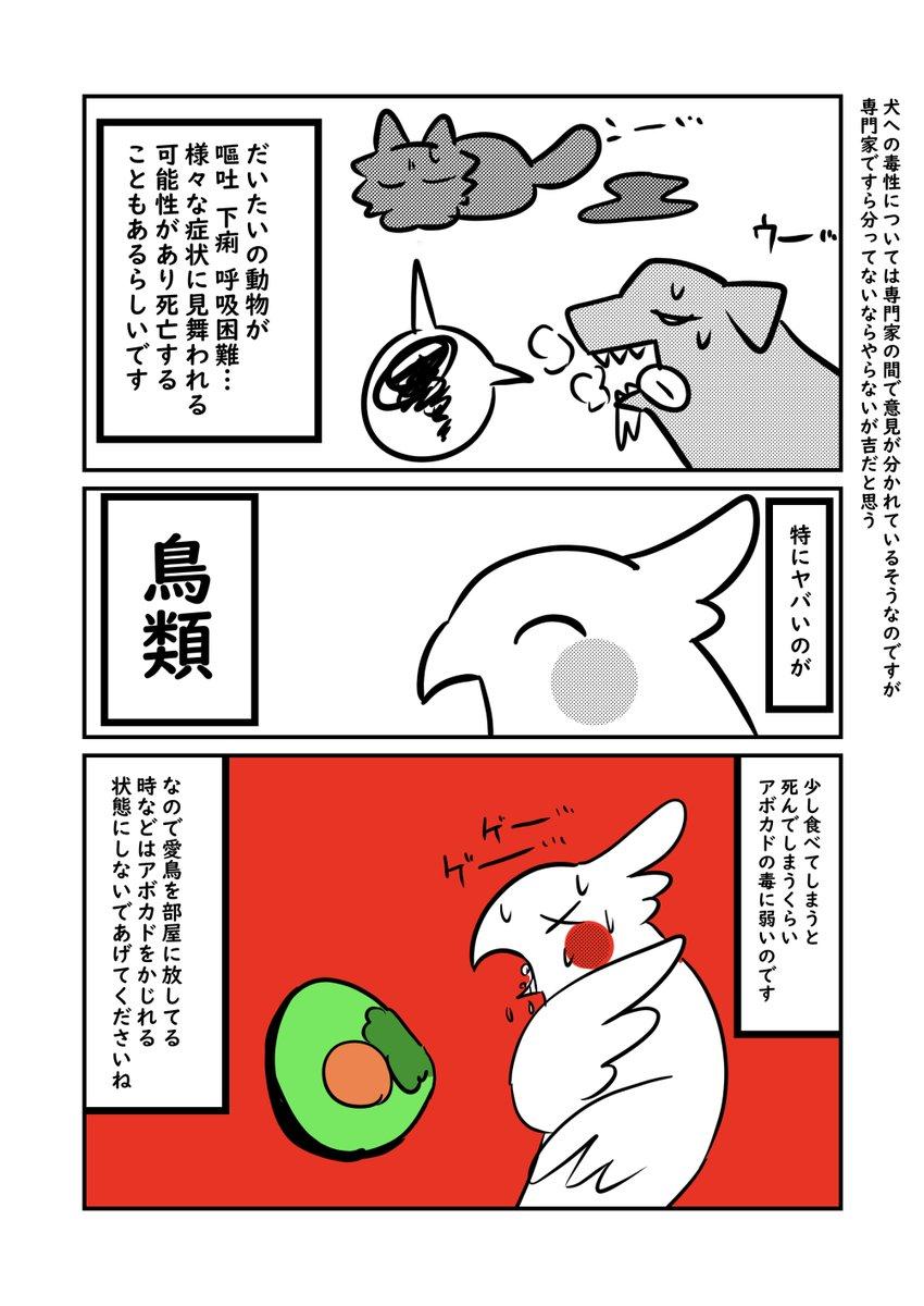 人間以外の動物にとってアボカドは危険な食べ物?!ペット、特に鳥を飼っている人は知っておきたいお話