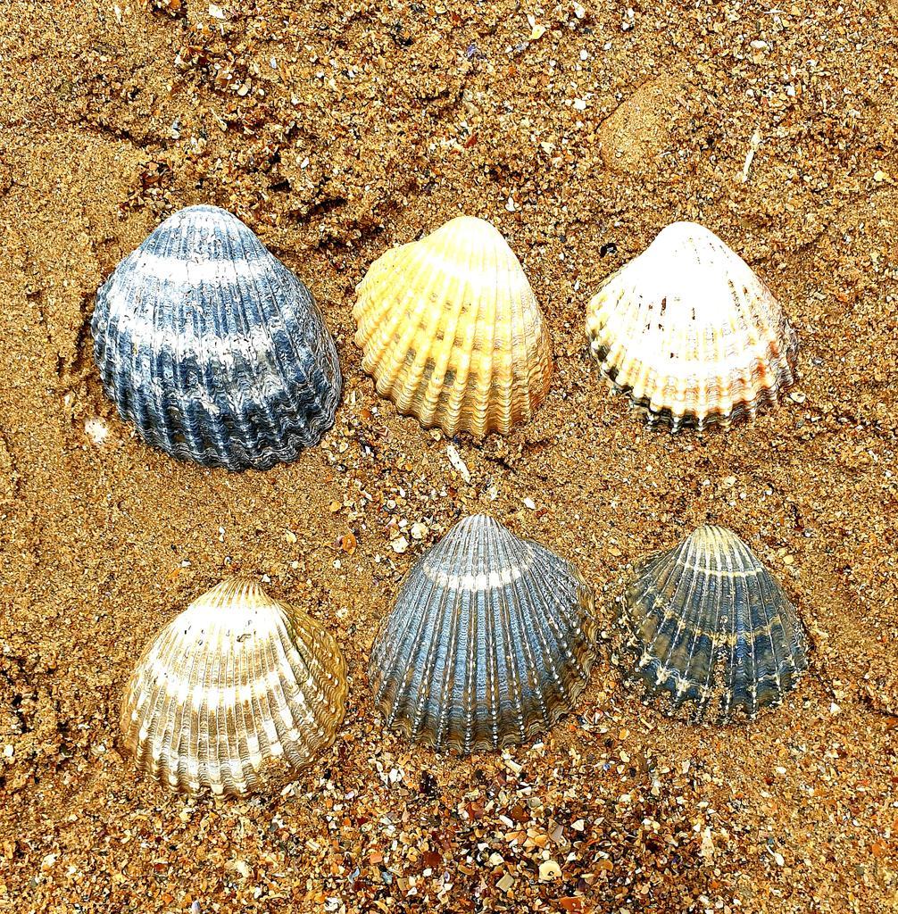 A Miracle of Seashells, Merville Franceville Beach, Normandy https://t.co/vlxnCUmZnK