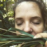 Just breathe.  #garden #aromatherapy #lemongrass #homegarden #medicinalplants
