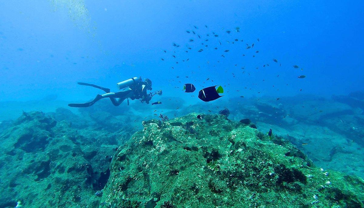 The world's aquarium  #MEXTRAVELERbcs #discoverbcs #loscabos #traveling #visitBajaSur https://t.co/VirygFn3BK