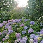 Honuppi_のサムネイル画像