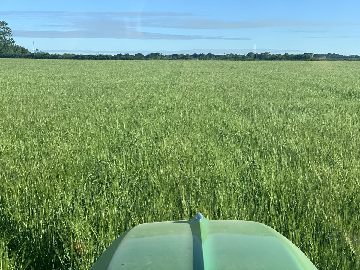 test Twitter Media - Up early this morning to spray the @RobinAppelLtd #marisotter barley. Cheapest crop this year. Just had it's one and only fungicide. 😬🤞🏻 https://t.co/06pTroKhT6