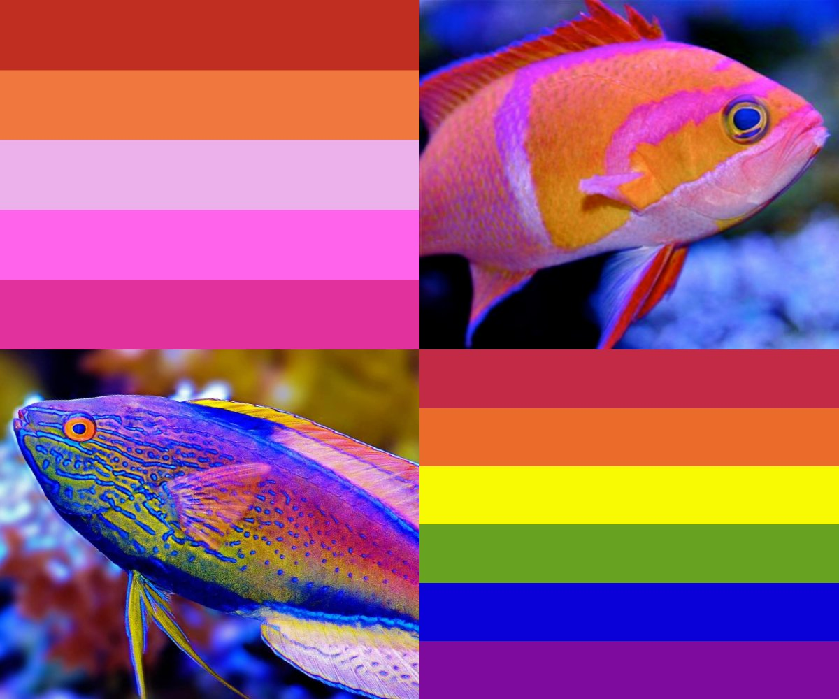 RT @ElasticMud: Pride flags picked from marine fish I like :) https://t.co/8BNHHHDsnK