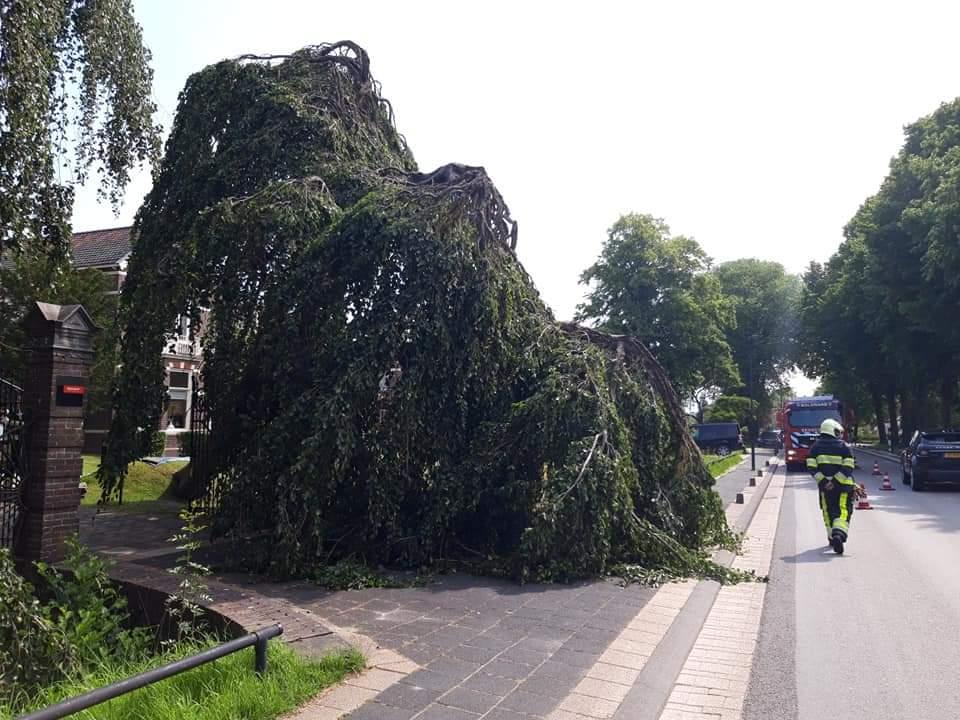 Brandweer inzet voor omgevallen boom op de Snekertrekweg in Bolsward..
