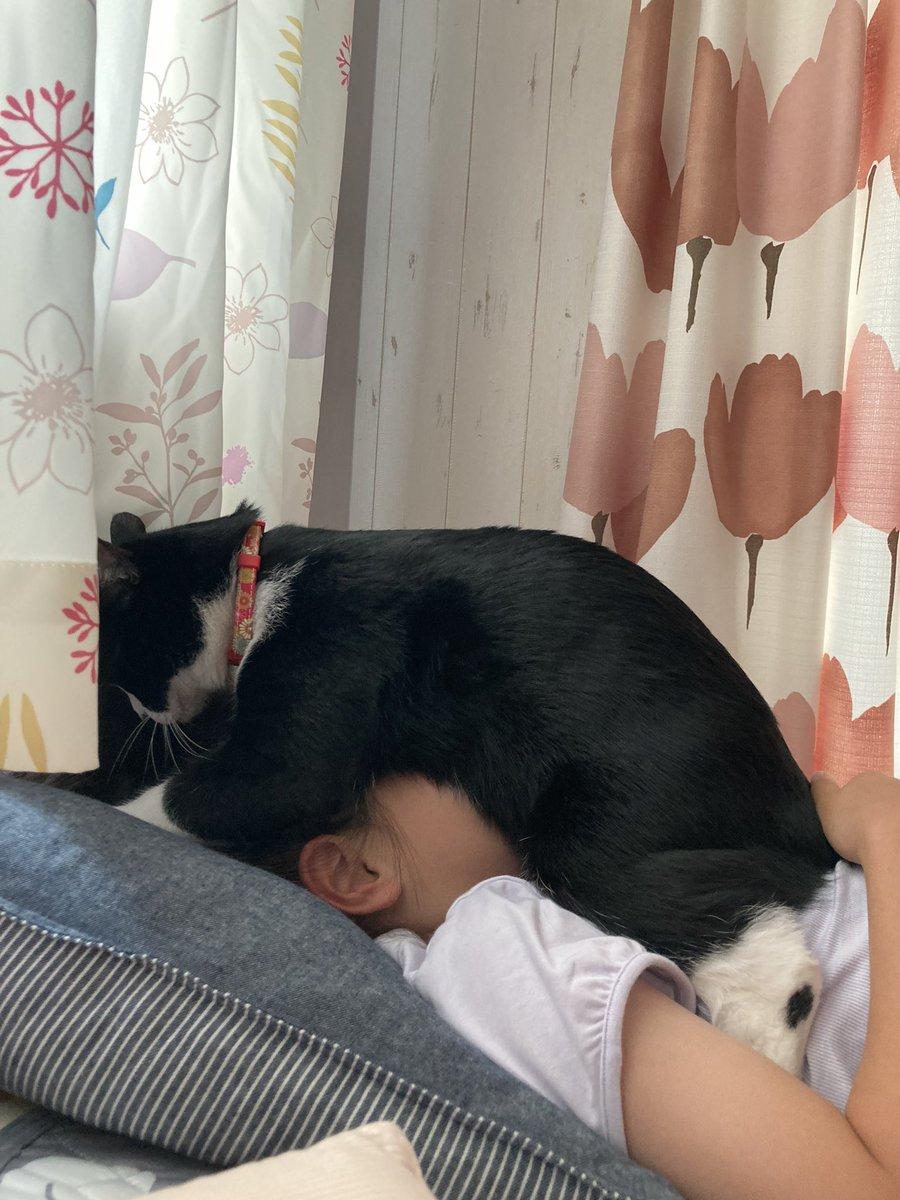 目覚ましは猫のおなかで!にゃんと幸せな・・・。