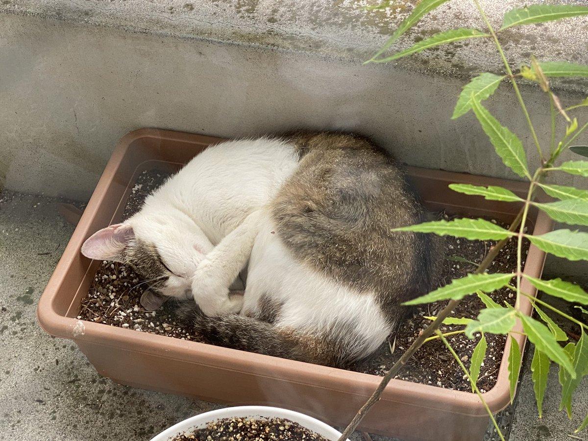 愛猫がいなくなったと思ったら…?ベランダに咲いていたw