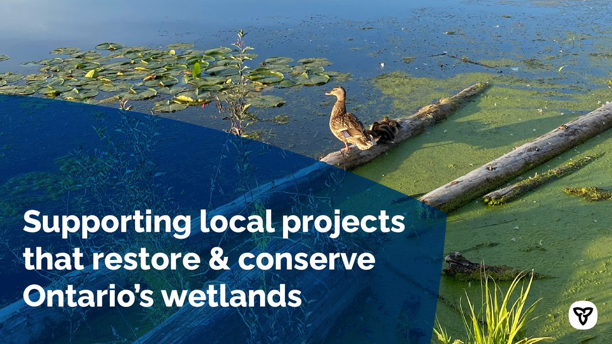 Wetlands play a vital role in the health of our #environment & our communities and we are taking action to restore & enhance Ontario's #wetlands.  That's why we're investing $6M to support over 60 @ducanada projects across the province starting this year.  https://t.co/Br0vrTNYcG https://t.co/5pLhTLmpxa