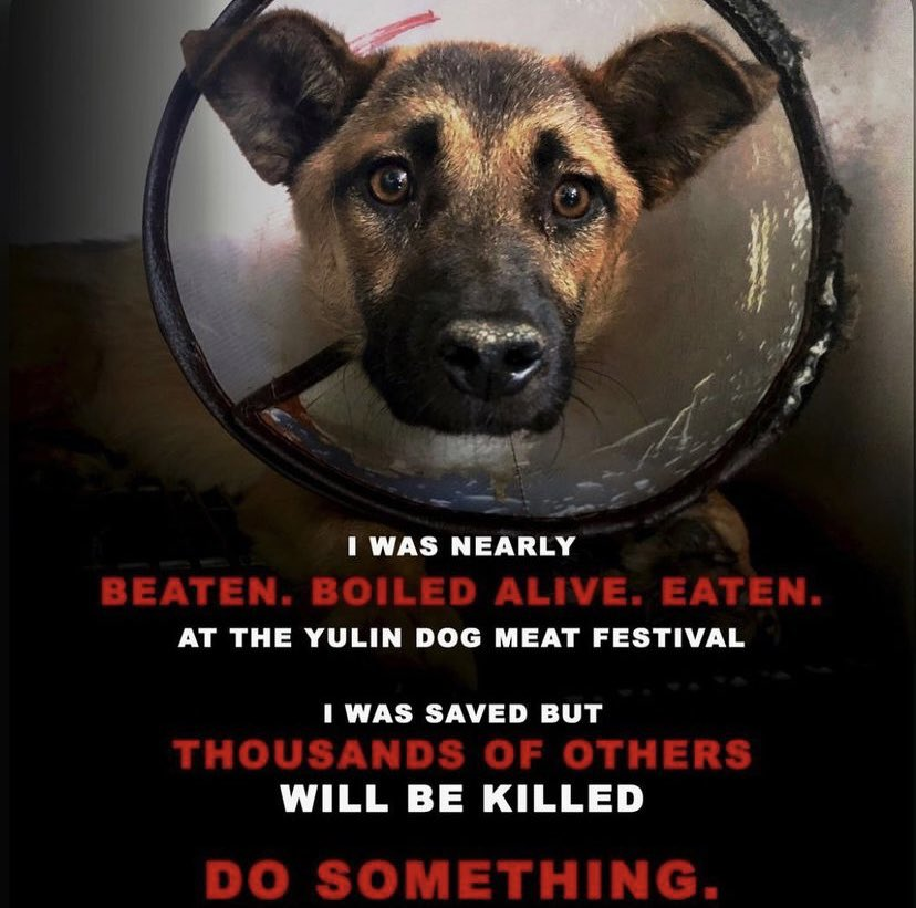I was nearly beaten , boiled alive & eaten💀   I was saved, but thousands of others just like me will be KILLED! 💀🔥  I am calling on 🗣the GLOBAL COMMUNITY! PLEASE! Do SOMETHING!!! HELP US!!!! 💔  #EndDCMT #EndYulin #StopAtChina https://t.co/L4LaaGI65n