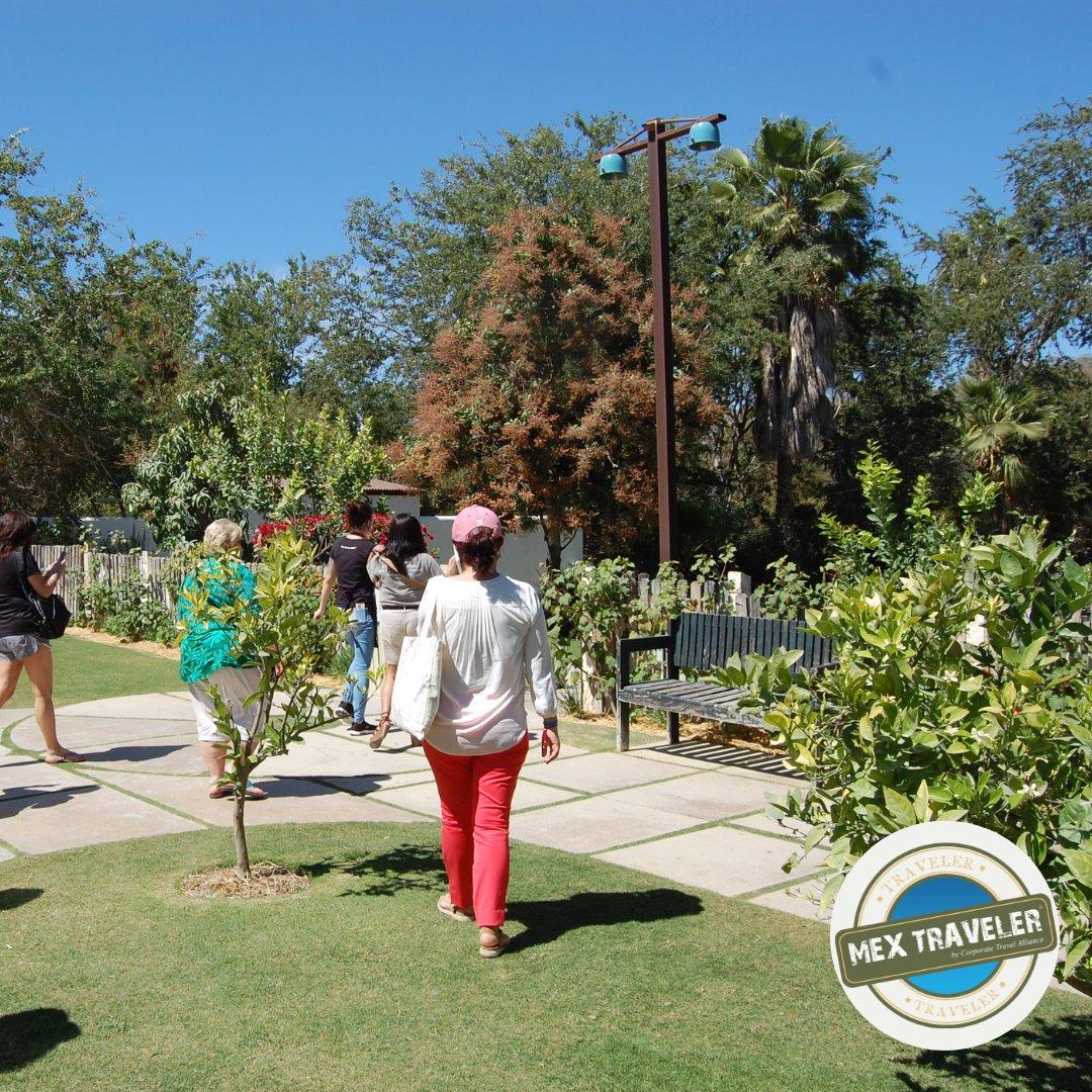 Harvest your own food @ Flora Farms  #MEXTRAVELERbcs #discoverbcs #loscabos #traveling #visitBajaSur https://t.co/Z0fmCWjD8E