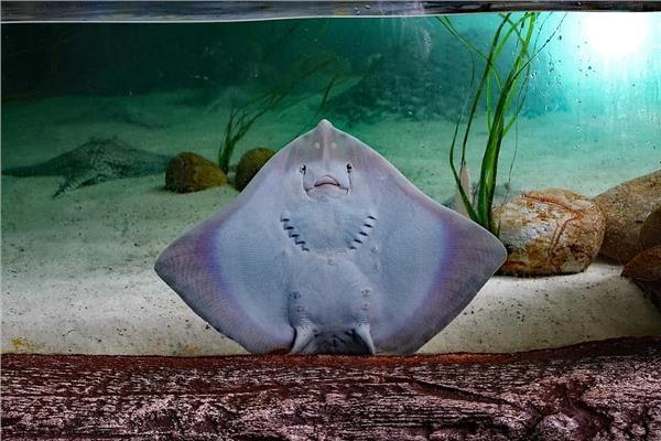 «بتضحك زي البشر».. سمكة تحصد ملايين المشاهدات على تيك توك