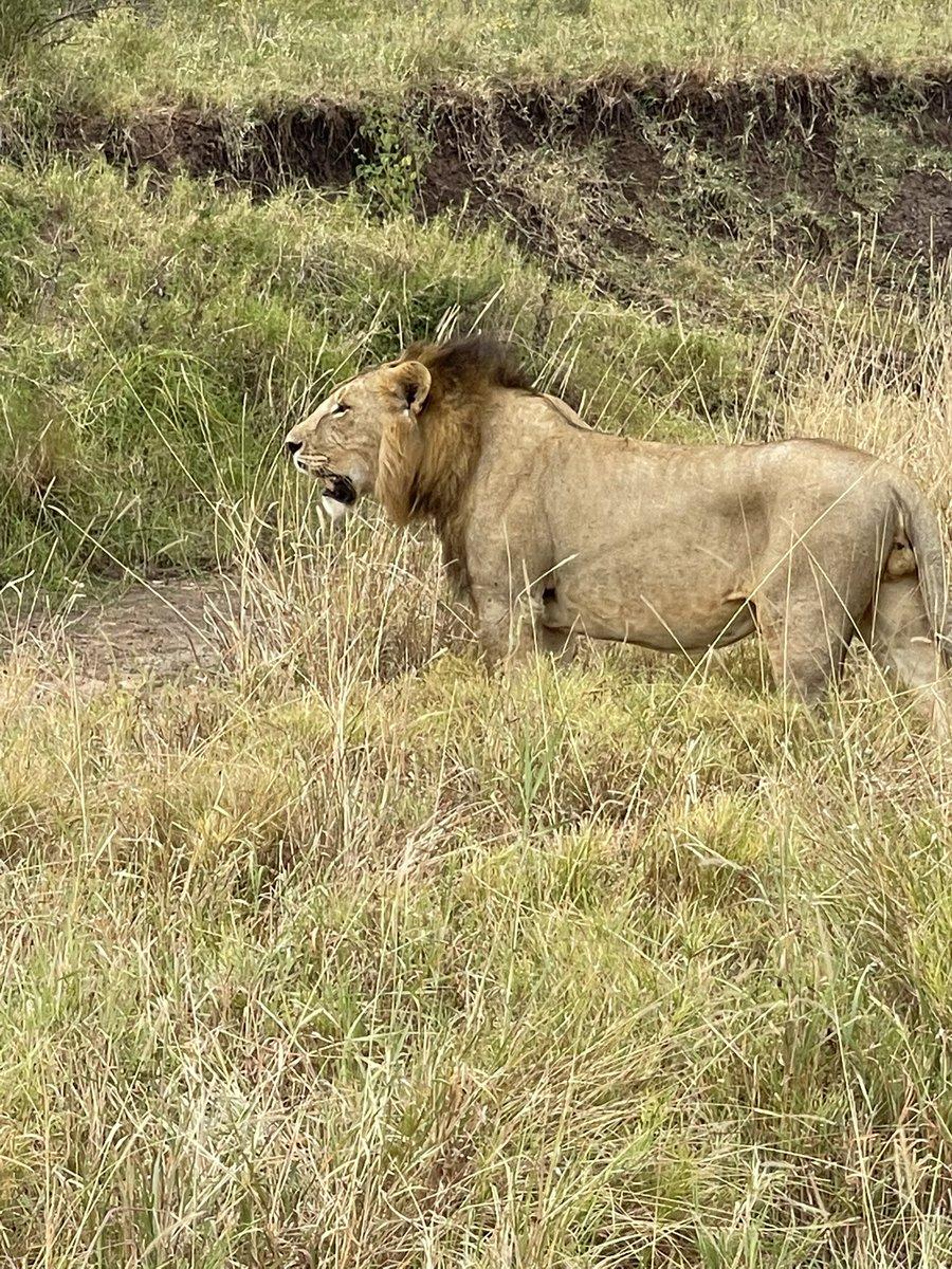 Update: we got lions! #Tanzania #Safari #lions https://t.co/C1h1BysH9W