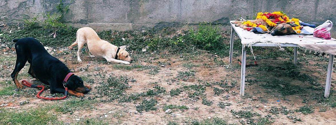 Vadodara Police dogs give final salute to their colleague, Meena