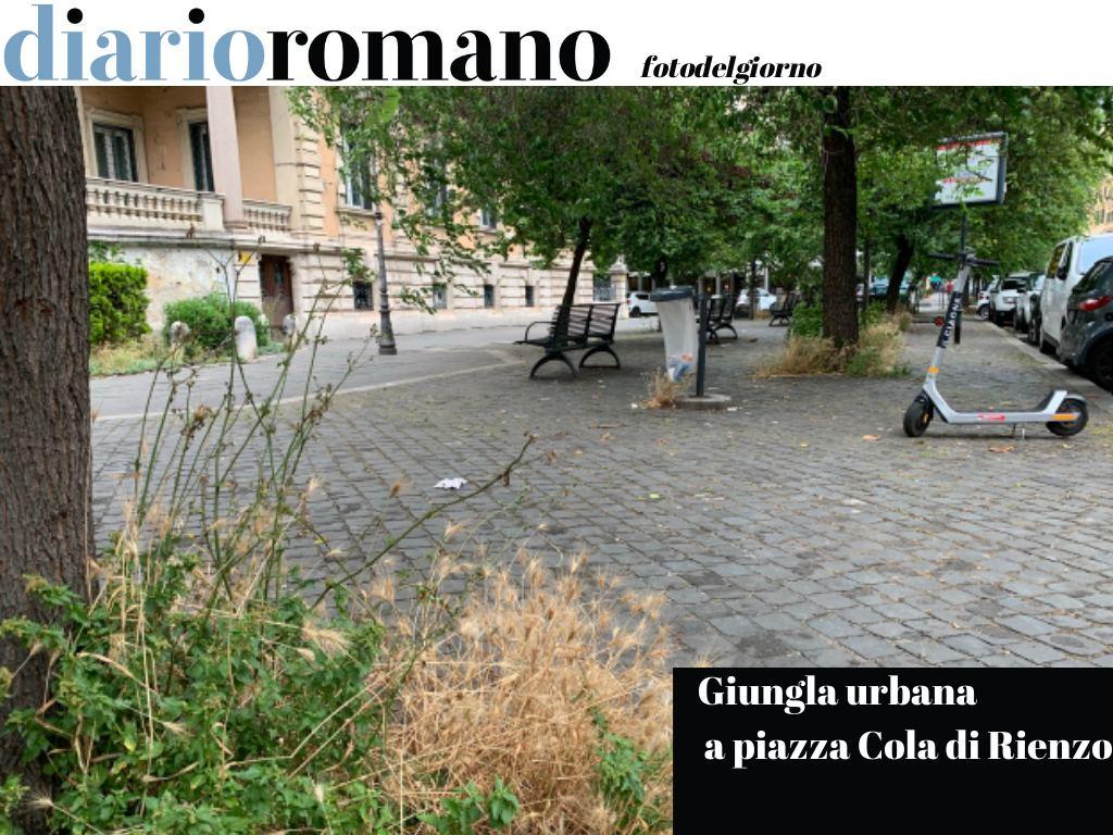 test Twitter Media - Vegetazione incolta alla base degli alberi e impossibilità di camminare per chi è più alto di un metro e mezzo, causa rami bassi. #Roma #FotodelGiorno https://t.co/hiDfyt5q6E