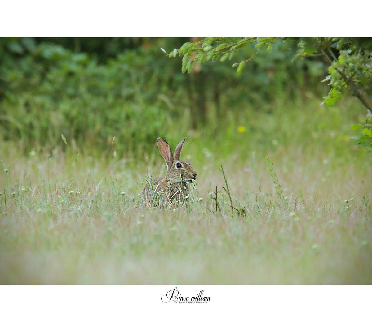 #naturephotos #wildlifephotography #wildnature #photoshoot #safari #france #photography #siberiantiger #animallover #animal #savetigers #respect#saveanimals #helpanimals #loveanimal #photography#peacocks#encounter #photographylovers#deer#cheetah#netgeo #netgeowild #myworld #deer https://t.co/rvLCszcaok
