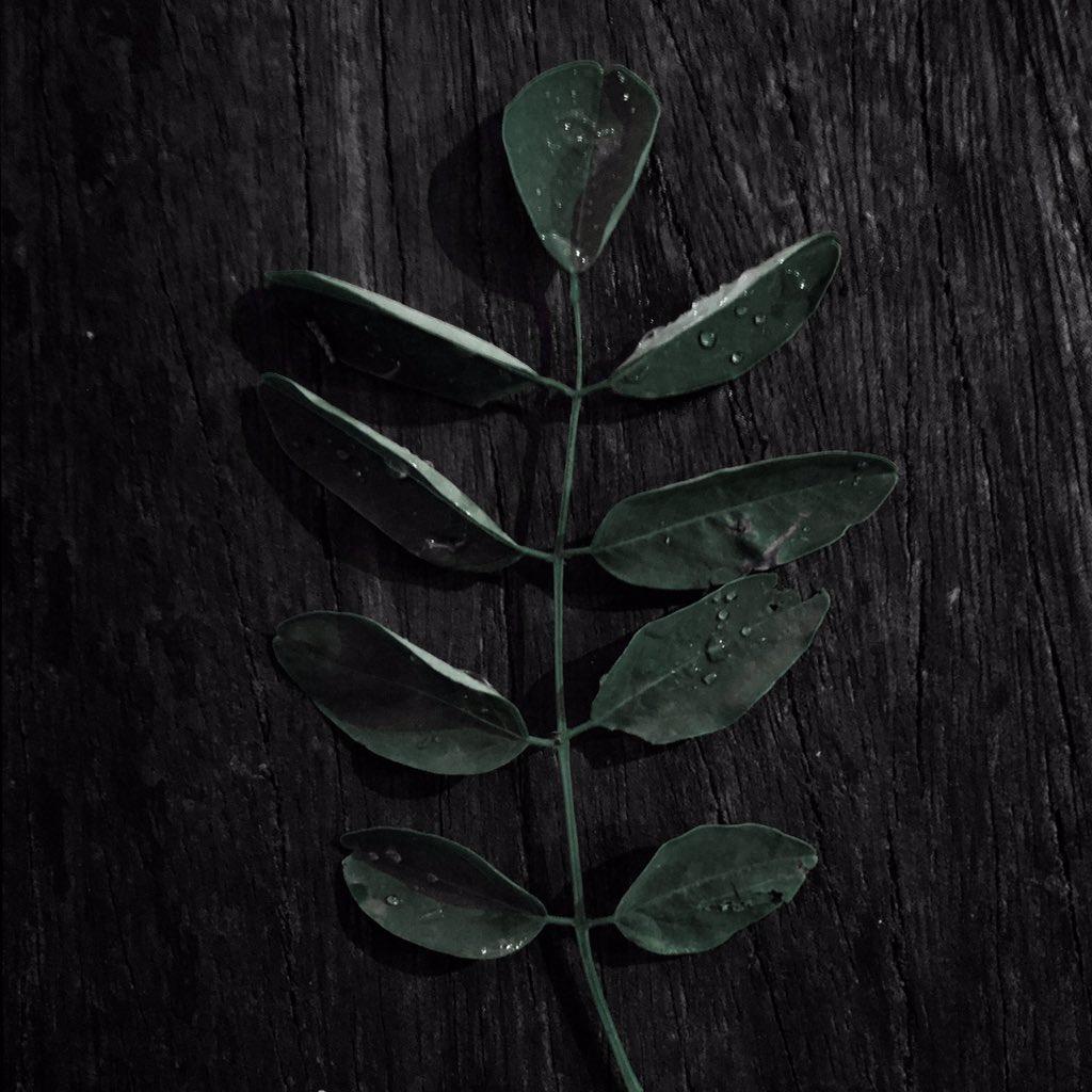 #noir #afterrain #leaf #tree #pattern #plant #wood #petal #art #twig #annonaceae #terrestrial #plant #nature #grey #green #growth #flower, #flowering #florafont #soil #abstract #grass #vegetation #texture #monochrome #araceae #dark #monochrome #photography https://t.co/stcqIC4xBi