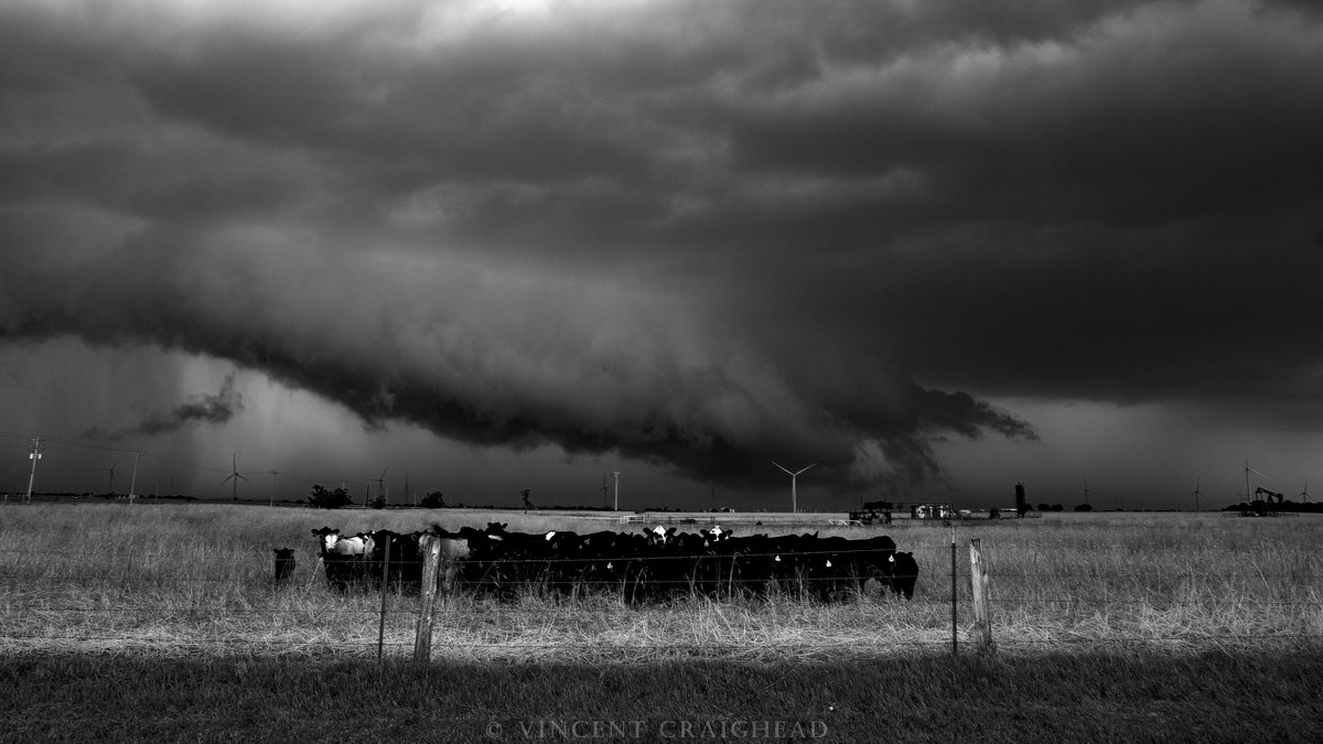 """""""Cows Attending to Observe Practiced Instincts in Order to Survive Atrociously Large Hailstones While a Supercell's RFD Gust Front/Wall Cloud Hybrid in Yonder Looms.""""  Dover, OK. 5/27/21.   @StormHour @ThePhotoHour #okwx @StormHourMedia @NatGeoPhotos #photooftheday https://t.co/cwSd0LvVWM"""