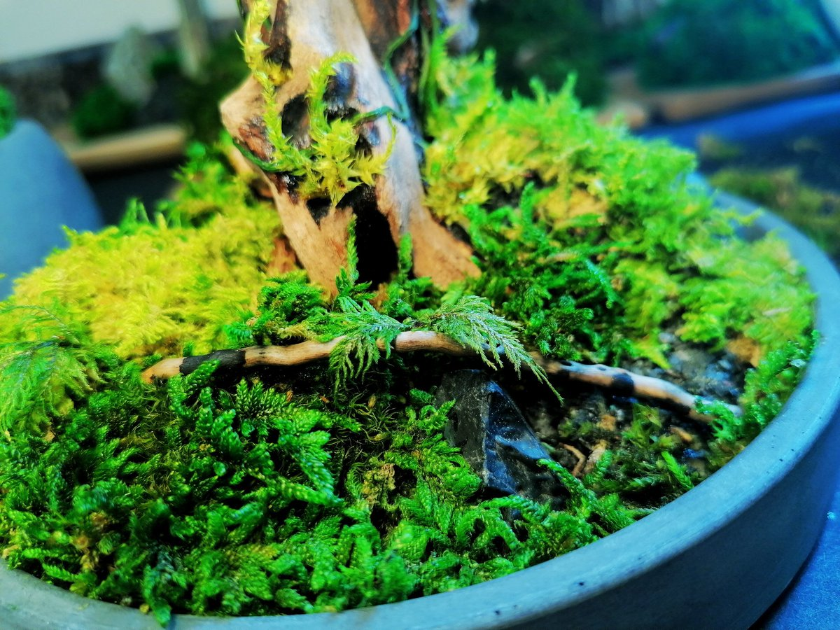 Close up shot of a Micro Firma terrarium sculpture. 📷⛰️  For more details and other projects go to https://t.co/VWrDbC71J5 . . . #etsyfinds #handmade #ArtistOnTwitter https://t.co/YhC6NIUIGe