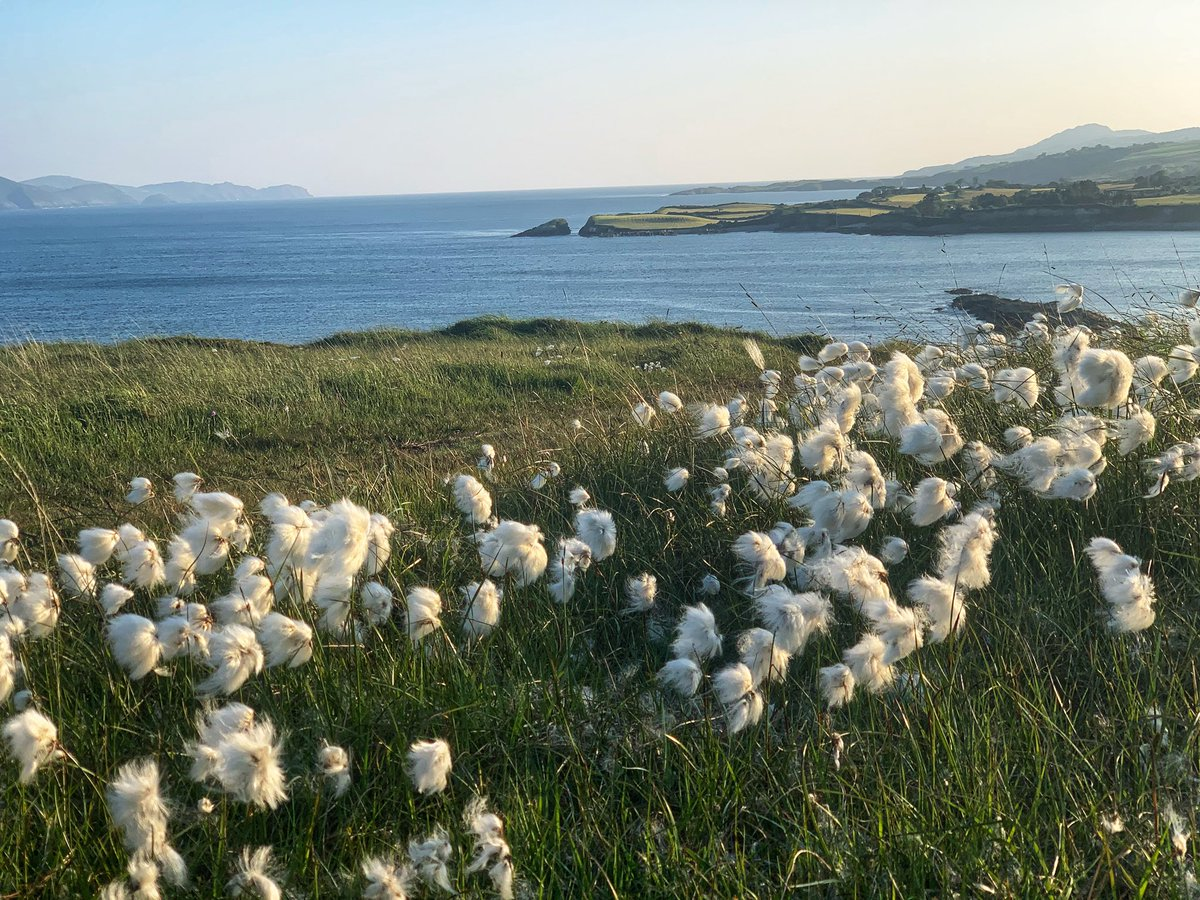 Summer evening with fluffy Irish cotton.   #ThePhotoHour https://t.co/UftqP4gew8