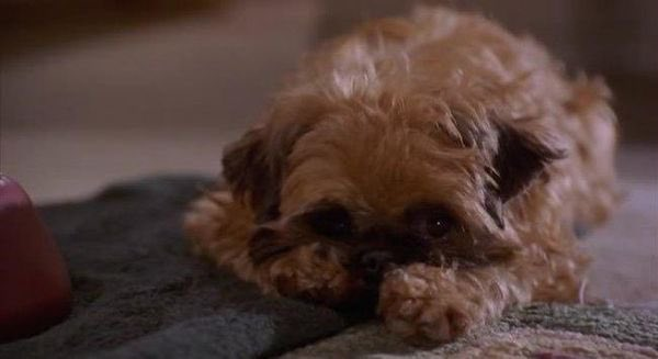 The greatest actor in cinematic history is without question the dog from AS GOOD AS IT GETS (1997) https://t.co/ndqfZEoOcv
