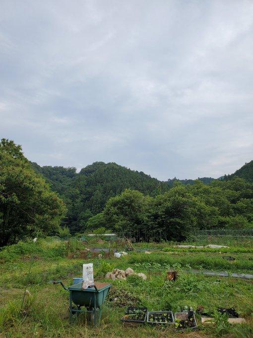 amakugidaikoの画像