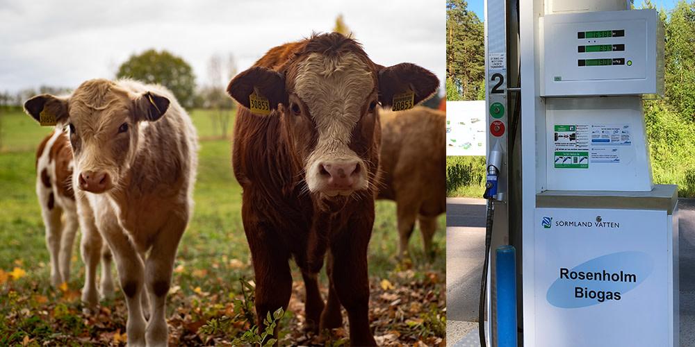 Om biogasbil inte är miljöbil borde också djur klassas som ohållbara https://t.co/WeMF1Hh5rc https://t.co/mp8vMHeSH6
