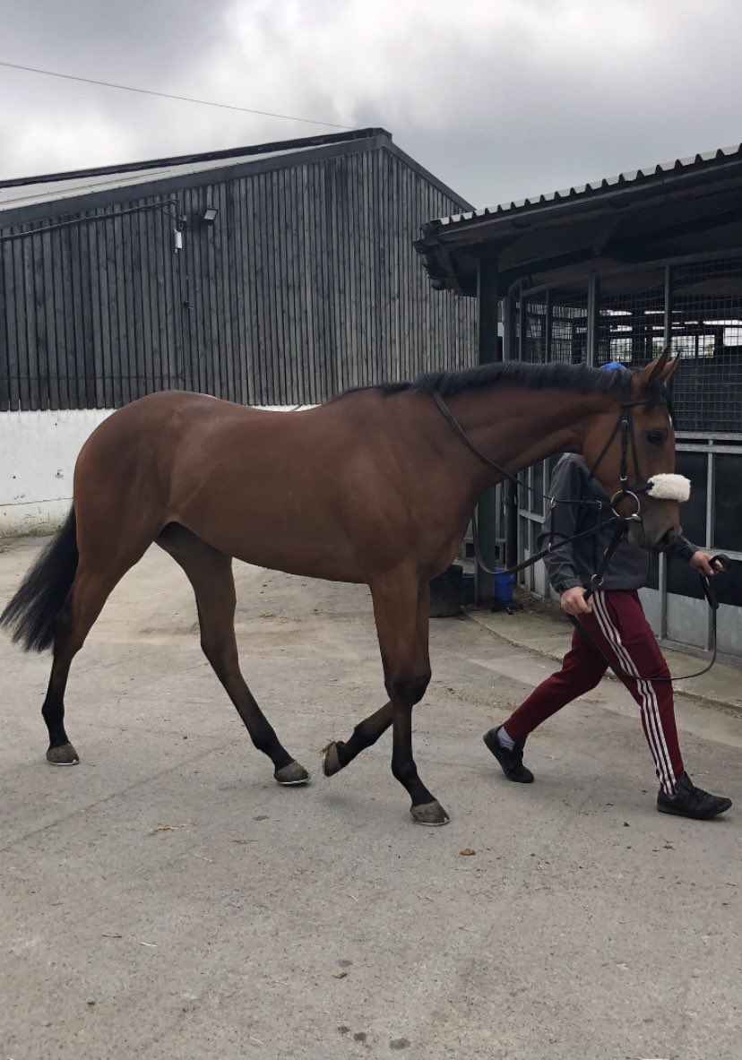 Moon Bay makes her racecourse debut @ponteraces on Sunday afternoon and Paul Hanagan rides. If you love your racing and visits to the yard then our club could be ideal for you. New members are always welcome, please get in touch for full details.  https://t.co/mVTVMpVEHt