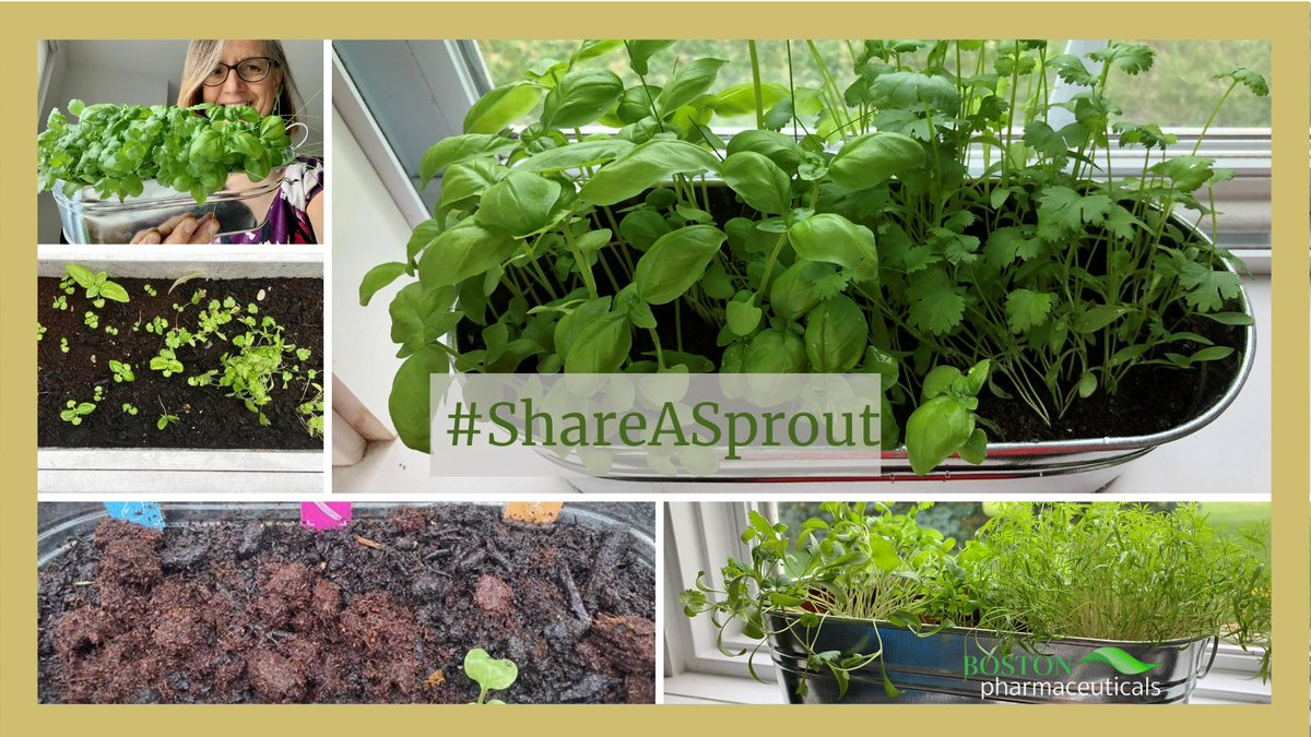 These look amazing! 🌱💚 Thank you for participating in our social media challenge to bring awareness of the importance of gardening, especially for students!! Looking forward to seeing more sprouts through #ShareASprout 🤩