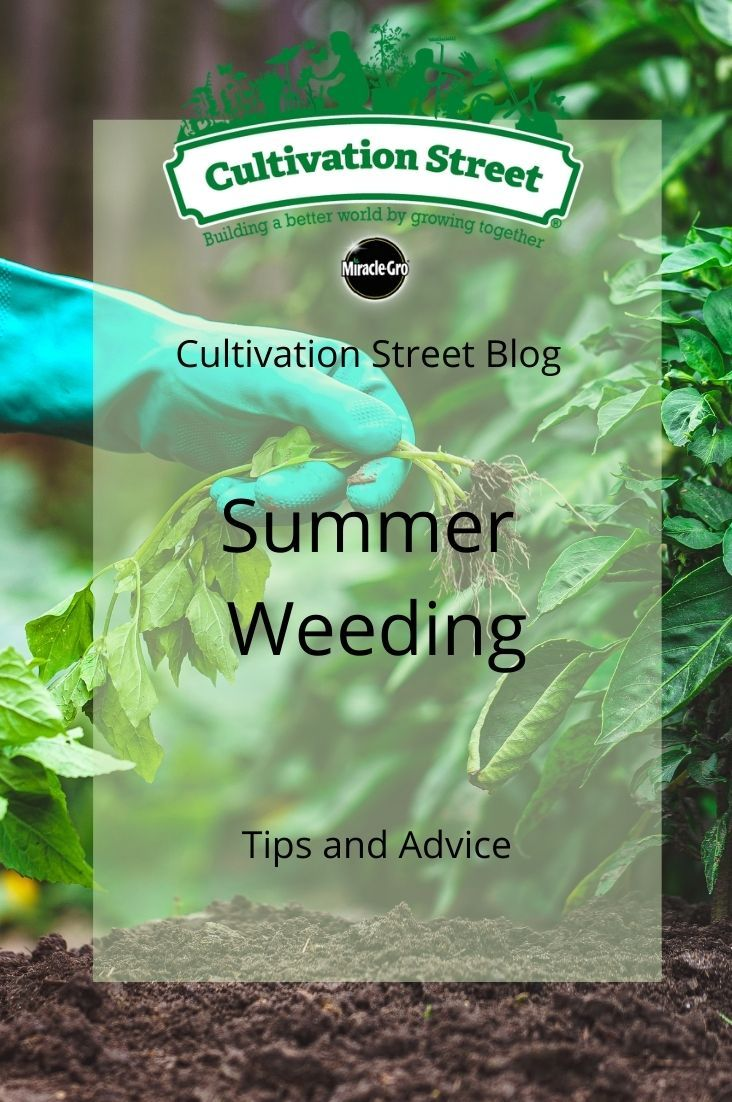 CultivationSt photo