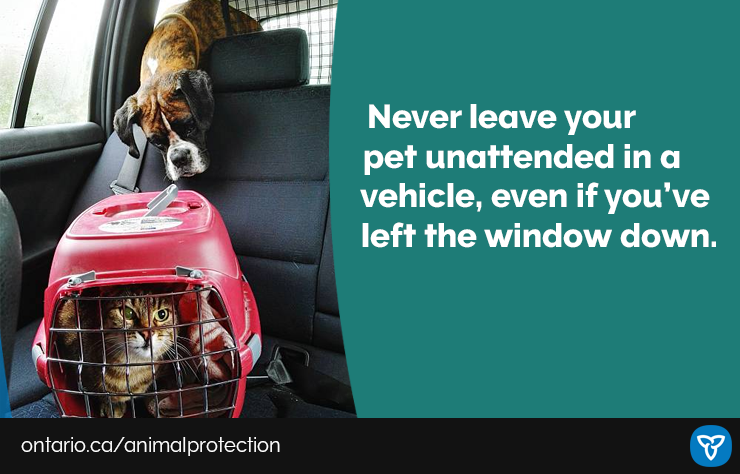 While safely spending more time outdoors, make sure that pets aren't left unattended in your vehicle. Temperatures inside your vehicle can quickly become hotter than outside and can even be fatal. Learn more: https://t.co/VfrgoZapkg #animalwelfare https://t.co/PdvYBEbwTR