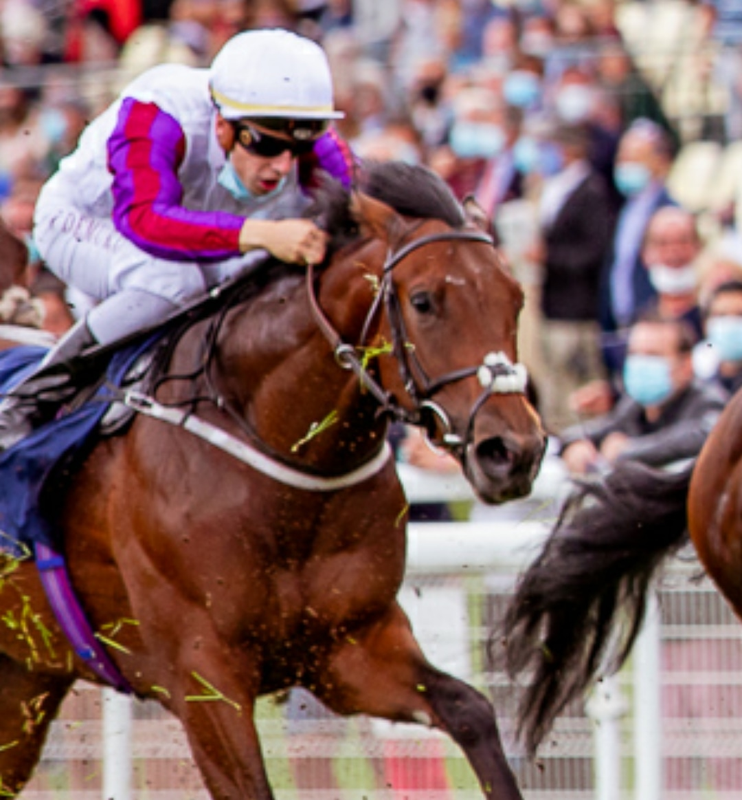 RHYTHM MASTER heads to @Ascot for the @RichardFahey team for the Jersey Stakes.   and debutant ROLLAJAM goes to @Redcarracing for @jeddokeeffe.