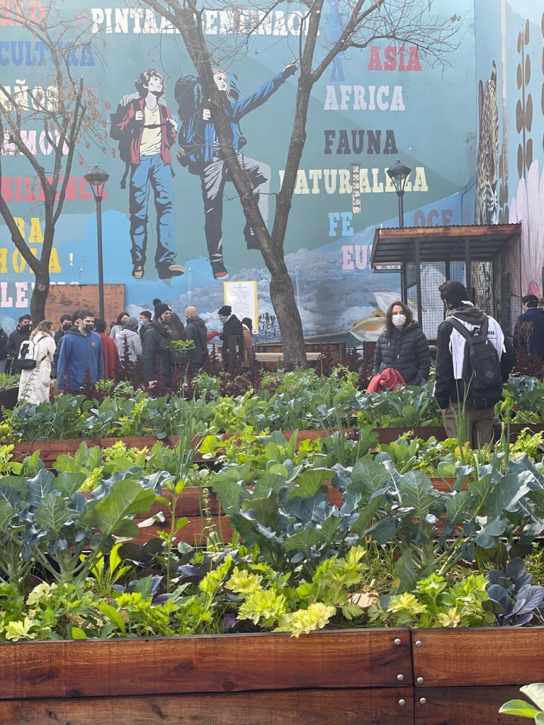 Vecinos de Palermo felices, cosechando la huerta urbana apadrinada por la Parrilla Don Julio. Se acerca el #Campo a la ciudad y con fines solidarios. El Gobierno de la Ciudad de Buenos pone el predio. Todo espectacular.
