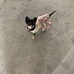 maria_ikeokuのサムネイル画像
