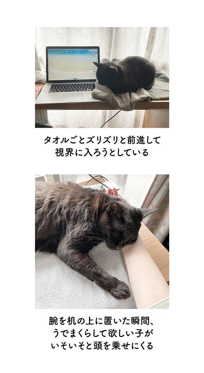癒されながら作業を進められそう!在宅ワークと猫のお話!