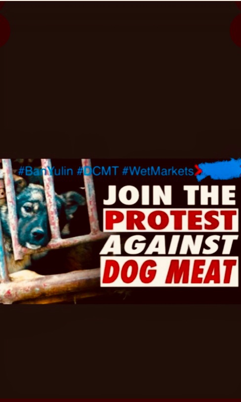 Join #Worldwide #Protests To Outlaw #StopYulin  Sickening Dog And Cat Meat Trade And Plagued Wet Markets  #OutlawTheDogAndCatMeatTrade #BanTheDogAndCatMeatTrade #BanTriads #BanLiveAnimalMarkets #AnimalProtection #Karma #covid19China #Covid19Asia #Virus #SARSCoV2 @MFA_China https://t.co/h4Er8aePKa