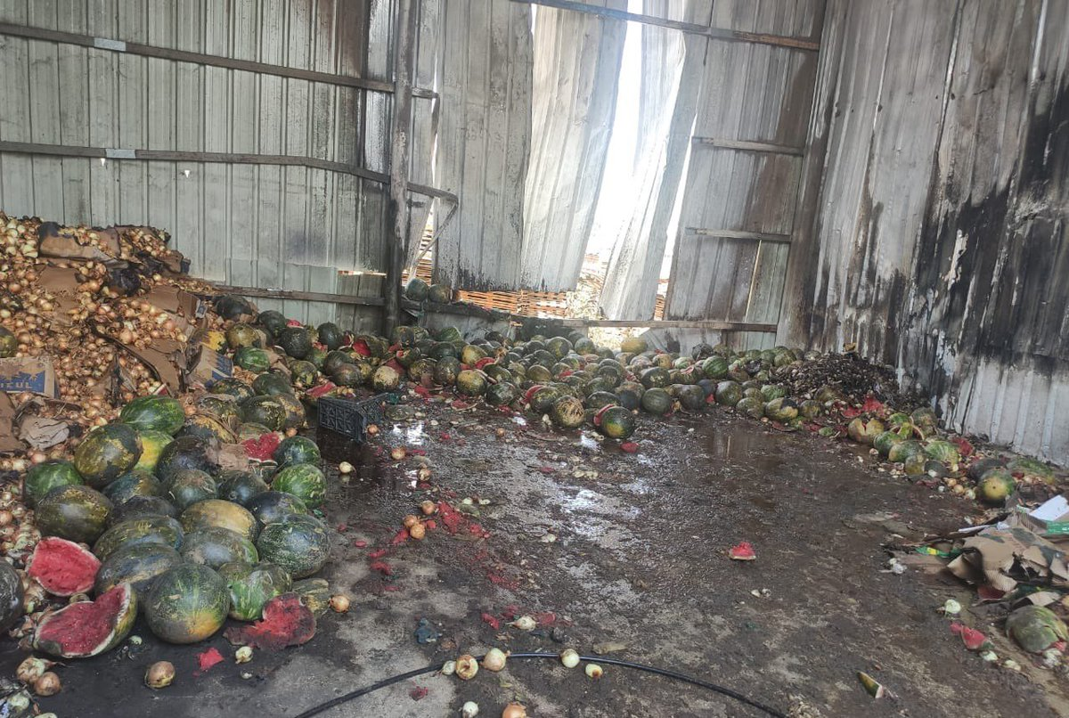 Israel destroyed 91,500$ worth of vegetables in Beita near Nablus by firing teargas at a vegetable storage unit.   Why?   Because Israeli settlers are trying to takeover Sbeih Mountain, & Palestinian owners are refusing this. Israel also killed 4 Palestinians including 2 children https://t.co/eTSoaNN2sc