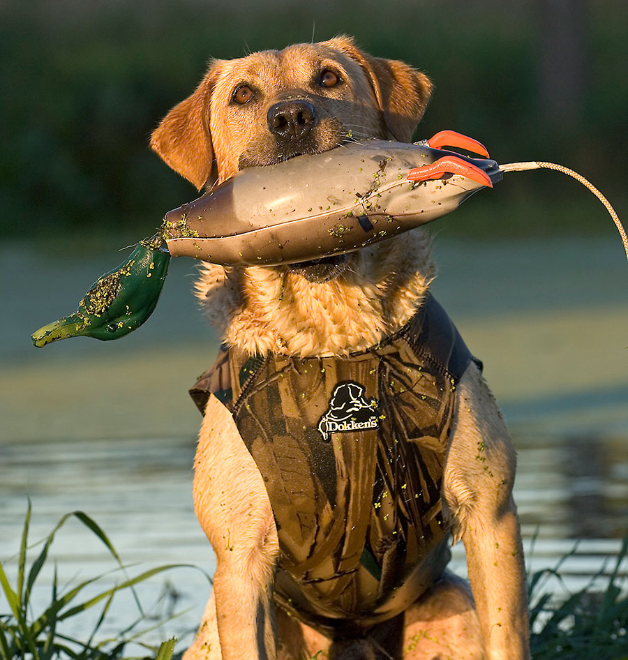 Buyer's Guide to the Best Hunting Gear for Your Furry Best Friend - GetZone https://t.co/3yLdTFN8gy #hunting #huntinglife #huntingdog #buyersguide https://t.co/wJWmJSfxMd