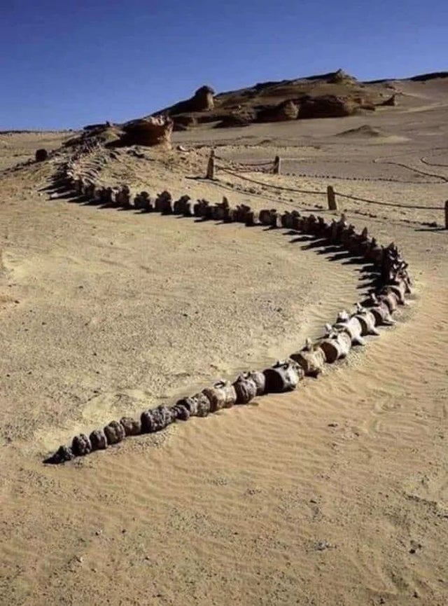 クジラの祖先?!エジプトの世界遺産ワディ・アル・ヒタン